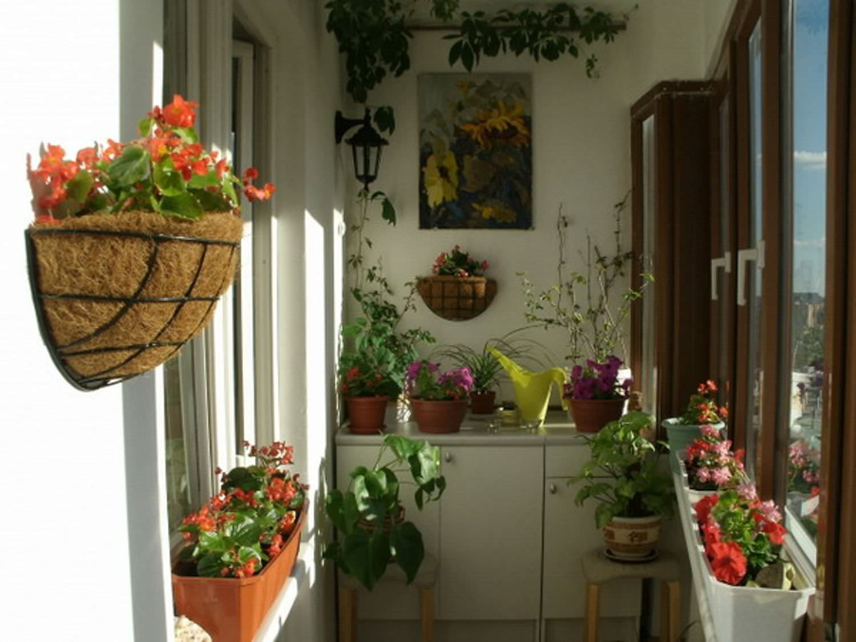 Как на совмещенном балконе организовать цветы фото..