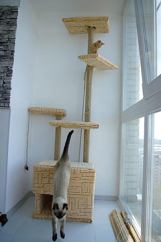 Своими руками построит кошки дом